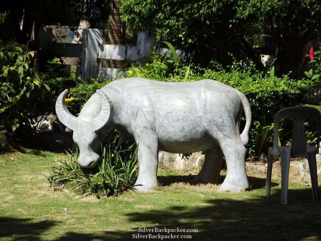 Carabao in the Mayors Garden