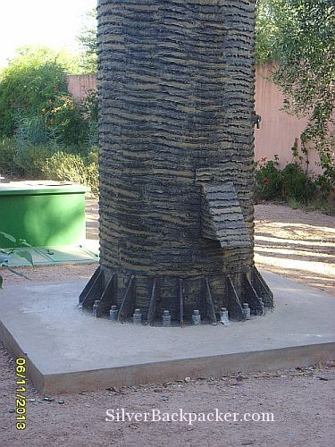 Base of Date Palm antenna