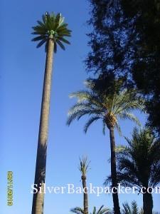 Date Palm Antenna Marrakesh