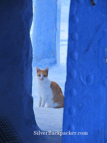 Ginger Cat in a Blue City Chefchaouen