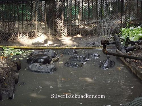 Turtles at the Atlanta Hotel Bangkok