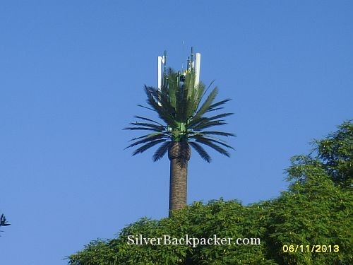 Date Palm Antenna Marrakesh