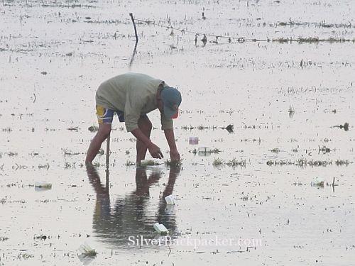 Caluya seaweed Farmer