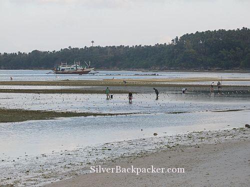 Caluya Seaweed Farming