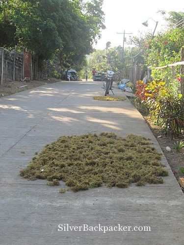Caluya seaweed drying on road