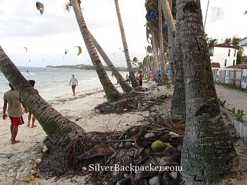 Kite in Coconut Palm on Bulabog Beach