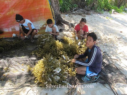 Seaweed farming is a family business