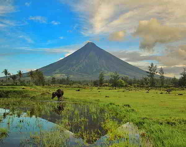 Carabao and Mayon Volcano, Albay, Bicol, Philippines