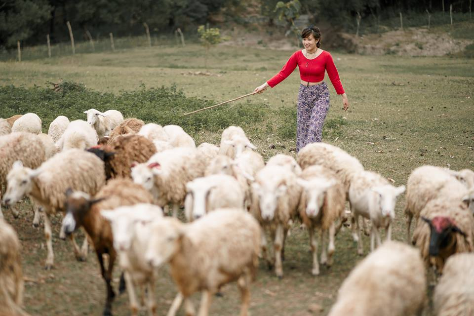 Herding sheep at PMP Paradise Farm, Nueva Ecija