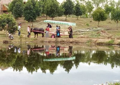 carabao cart to ride visitors around pmp paradise farm