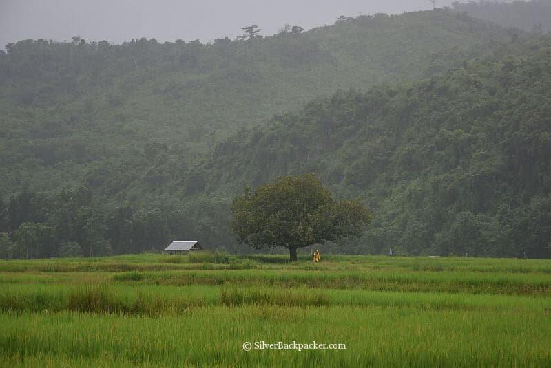 Rice Fields of Bucay, Abra