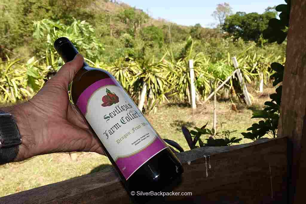 Dragonfruit wine Sevillejas Farm Mt Sedir Danglas Abra