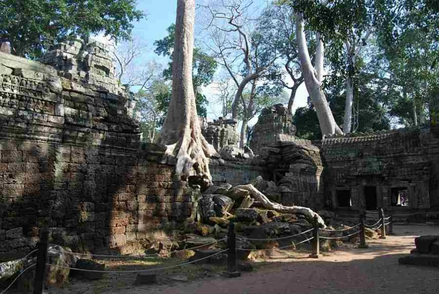 things to do in siem reap, cambodia View of Ta Prohm, Siem Reap Cambodia