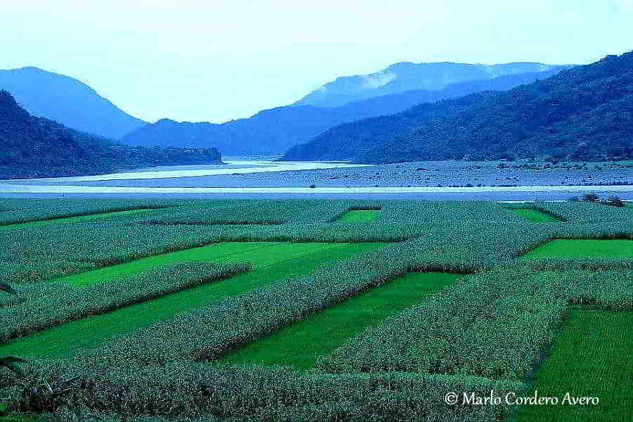 View of Tobacco and Rice fields, San Quintin, Abra