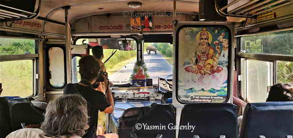 An elephant crosses the road ahead of a bus in Sri Lanka