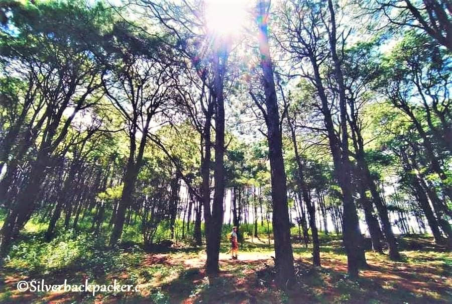 Talaay Pine Forest, Brgy Bonglo Route 204 Licuan-Baay