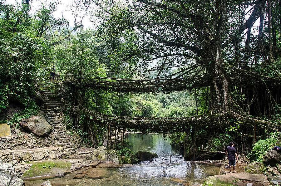 Double_Decker_Living_Root_Bridge Photo Courtesy – Ashwin Kumar