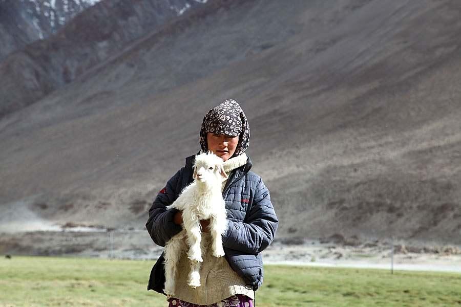Changpa_nomad_girl Photo Courtesy – Narender9