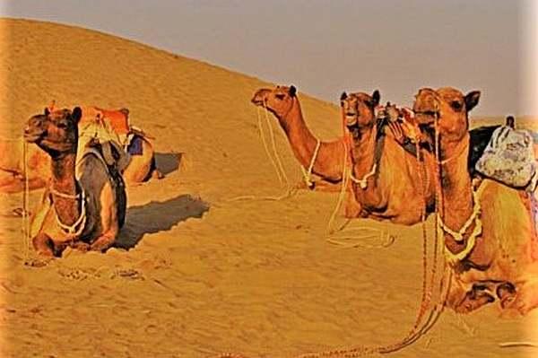 Offbeat India Tour Ideas A Camel Safari in Jaisalmer, Rajastan